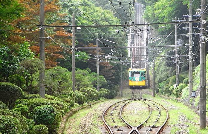 01_japan_forest
