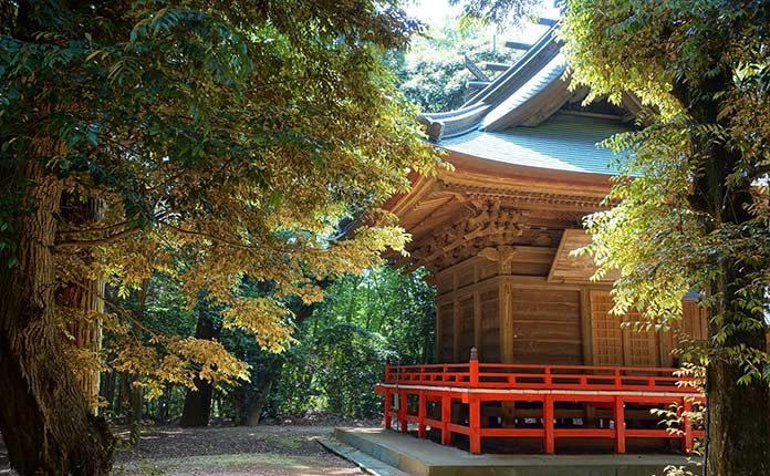 02_japan_forest