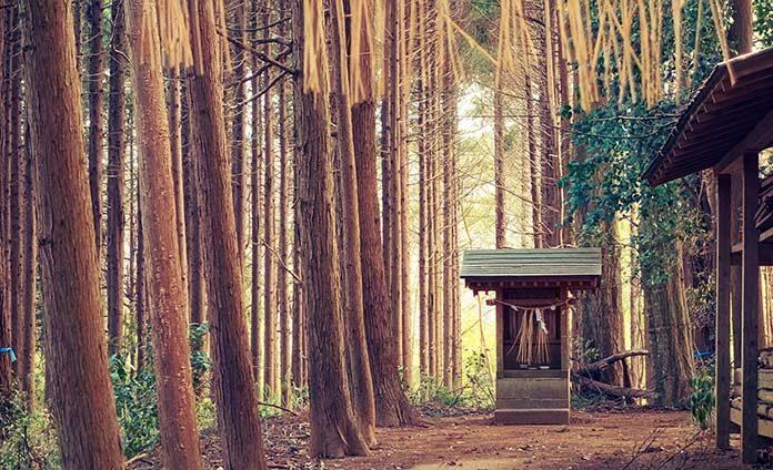 04_japan_forest