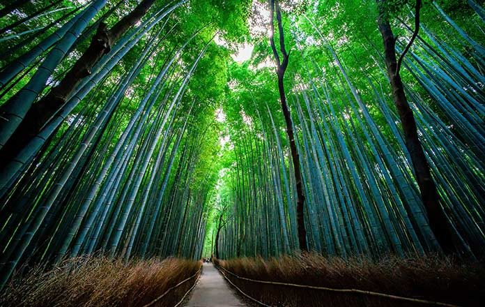 05_japan_forest
