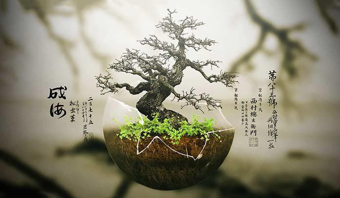 01_hiroshima_bonsai